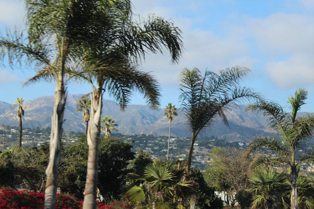 Palm trees down toward LA!