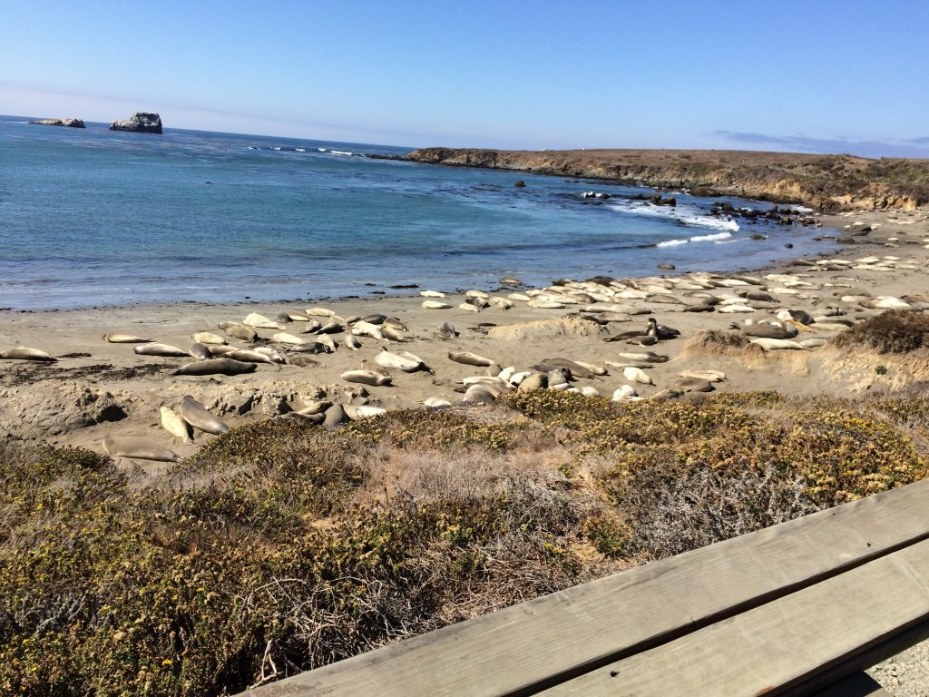 We found a beach with seals just chilling! Then a bird landed on Corey's truck and he had to chase it away.